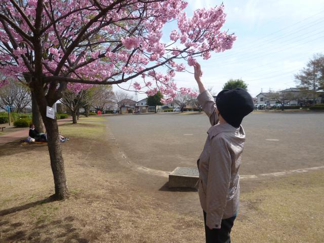 【AH川越】様々な色の桜を見ることができました☆お花見は、毎年皆さまで行きたいですね☆