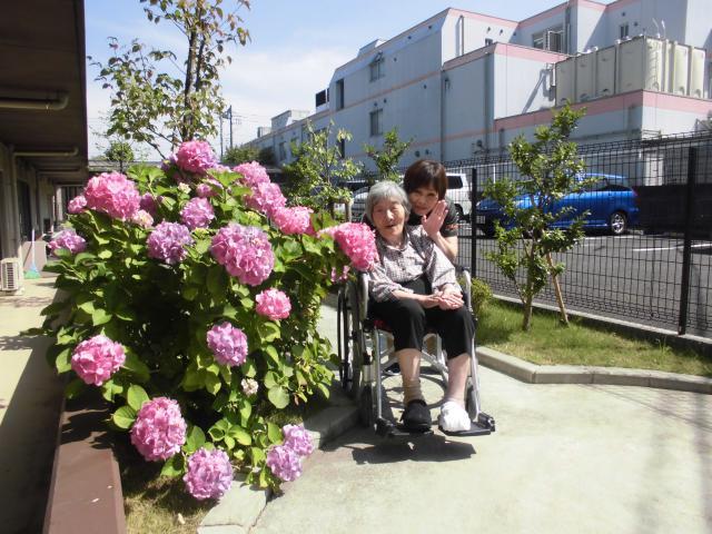 【AH町田】中庭にはきれいなアジサイ☆家庭菜園で育てている枝豆やトマトも元気に育っています!