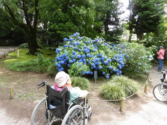 【AH文京白山】六義園にアジサイを見に行ってきました!素晴らしい日本庭園も堪能して来ました!