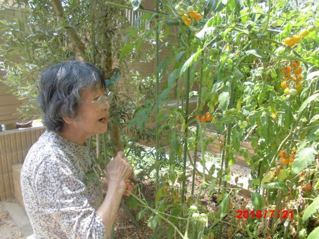 【AH千葉幕張】夏の恵み☆ホームの中庭に植えた、トマトとミニトマトを収穫しました☆