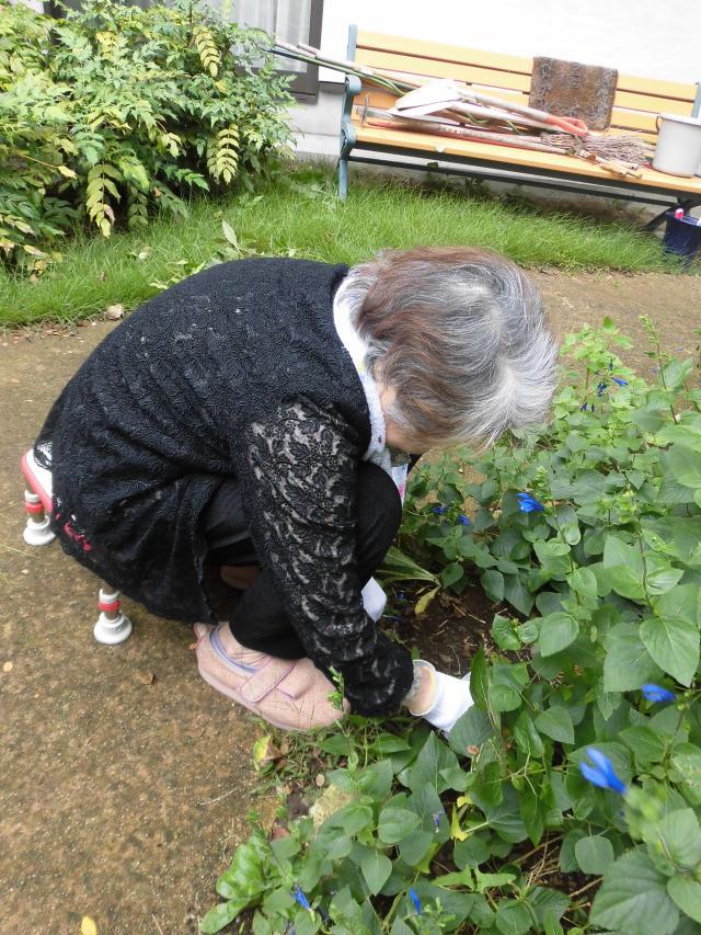 【AH横浜いずみ中央】土いじりをご希望のご入居者と一緒に、お庭でお花のお手入れをしました♪