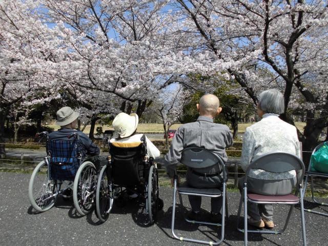 【AH光が丘】満開の桜を見に、お花見レクに行ってきました☆今年も満開の桜を見ることができました☆