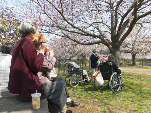 【AH横浜いずみ中央】満開の桜を見に行くことができました♪お花見目当てに、みなさんで長いお散歩です♪