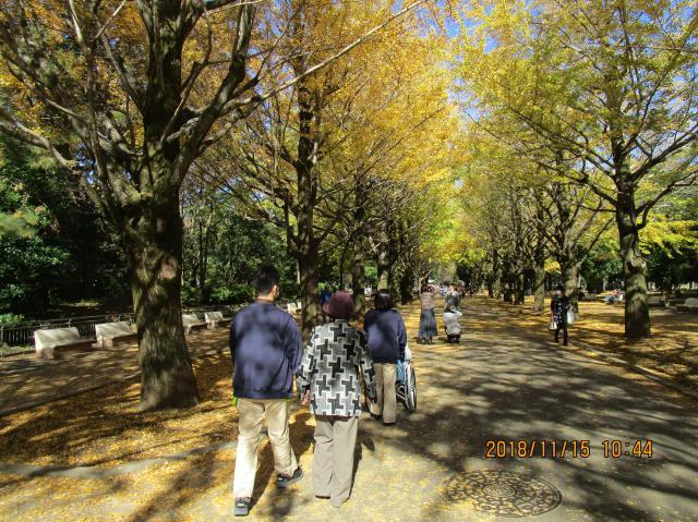 【AH練馬ガーデン】紅葉が綺麗な光が丘公園へ!ドライブ&散歩を楽しみました♪