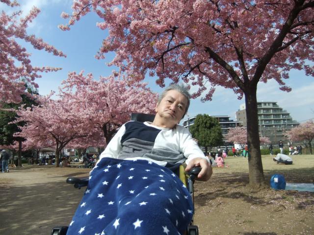【AH東浦和】早咲きの河津桜を見に、近隣の「井沼方公園」へ行ってきました!
