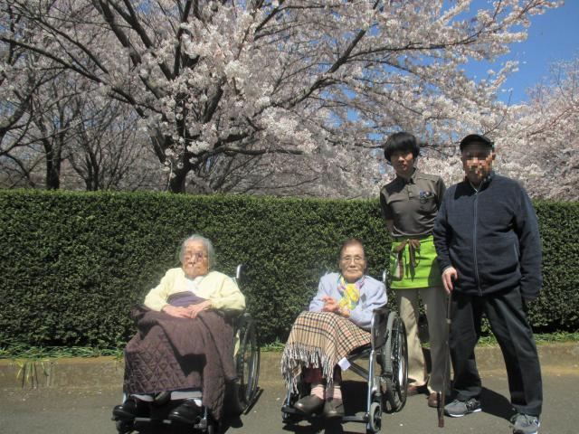 【AH横浜東寺尾】近所の大きなお寺にお花見に行ってきました♪その後のお食事も満喫されていました♪