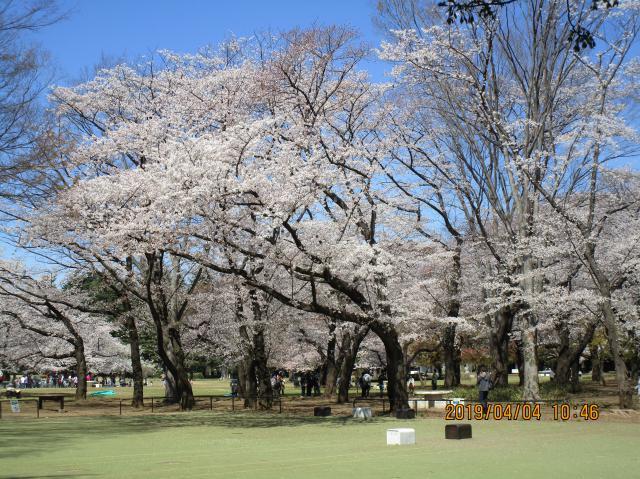 【AH練馬ガーデン】季節を感じる年中行事を大切にしています。春の恒例、お花見に行ってきました!