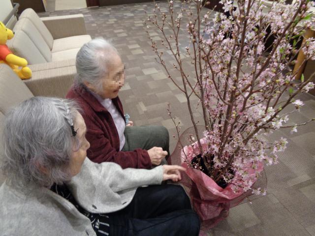 【AH横浜上大岡】ロビーに設置した桜に、自然とご入居者が集まってきます☆