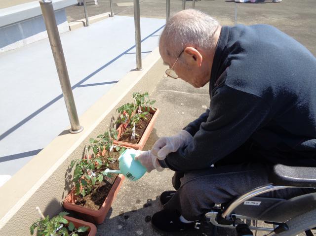 【AH横浜上大岡】プランターでのトマト栽培に挑戦!ホームの屋上で育てていきます♬