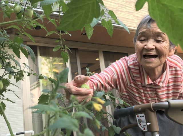 【AH上福岡】中庭で育てているトマトとナスを収穫しました!
