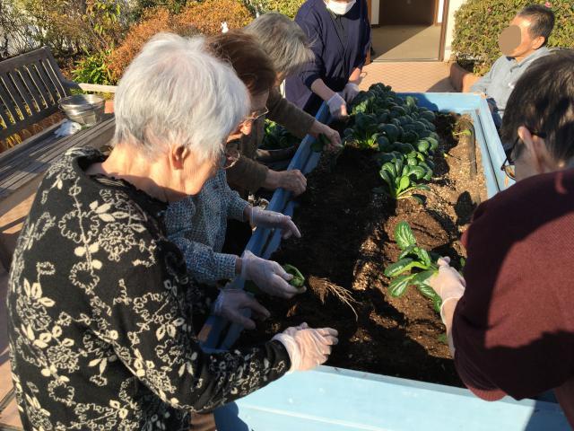 【AH市川アネックス】「夢を叶えるプロジェクト」で、屋上菜園の小松菜を収穫しました!