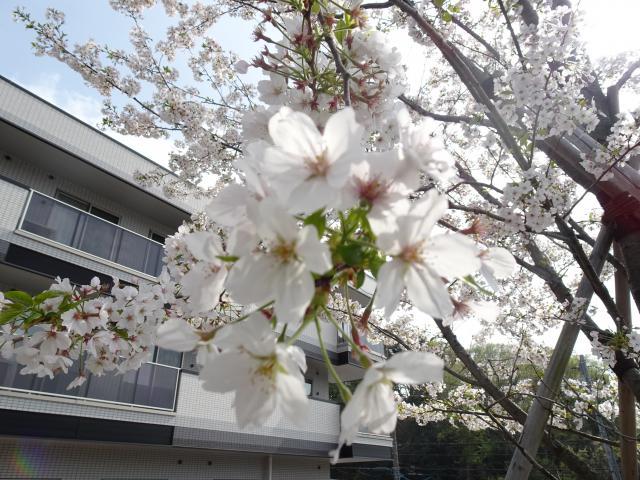 【AH横浜戸塚】ホーム内にある桜の木でお花見をしました♬
