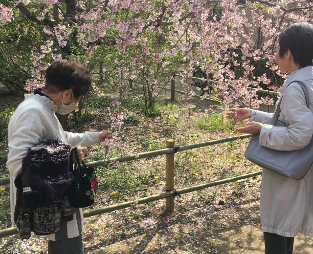 【AH市川】春は草花の季節ですね♬桜を見にお花見に出かけたり、ホームのテラスにある花々を眺めて楽しみます☆
