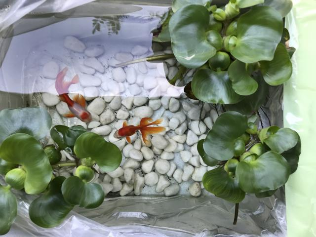 【AH町田】グリーンカーテンや、家庭菜園、金魚の飼育など、ゆったりとくつろげるホーム内の様子をお伝えします!
